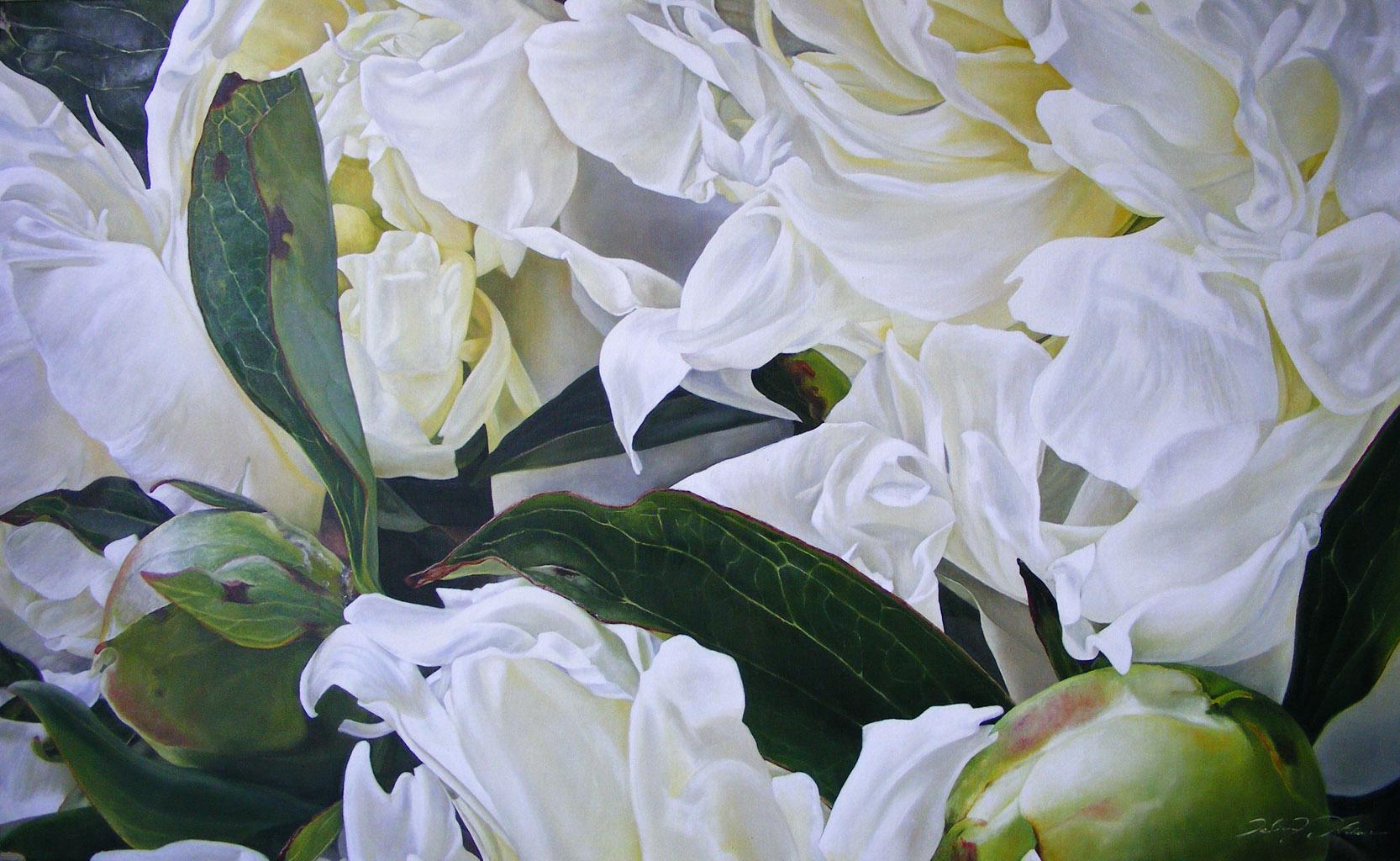 Peonia love spring