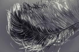 Mon beau plumage